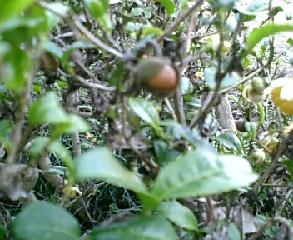 この木なんの木2…花も実もある